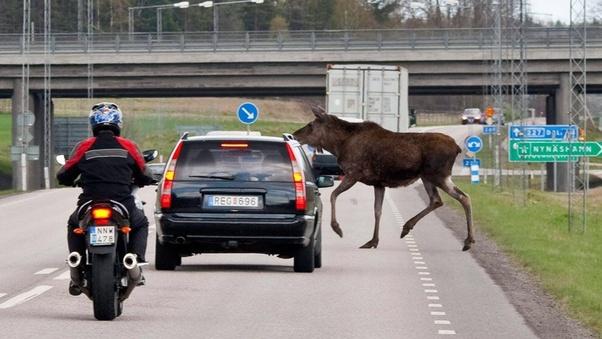 conducere în Suedia și permis de conducere UE